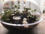 Terrariums as Meditation by Isabella Hurley
